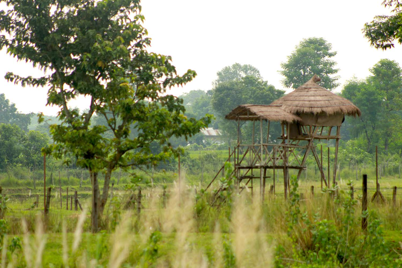 Bird watching Tower on Jungle Safari